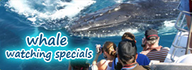 Whalewatching Specials